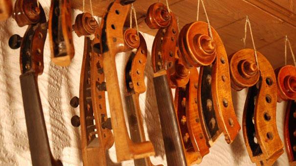 Geigenschnecken